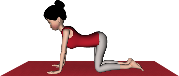 Marjariasana Yoga (Cat Stretch) Steps Benefits Precaution