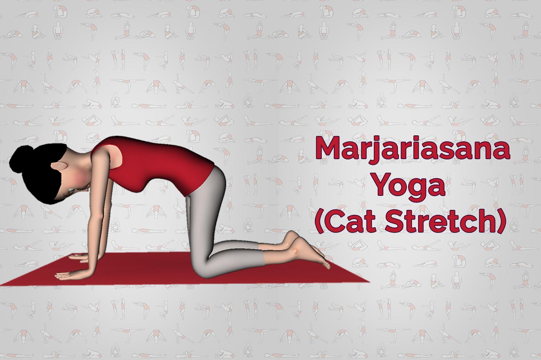 Marjariasana Yoga (Cat Stretch) Steps Benefits Precaution