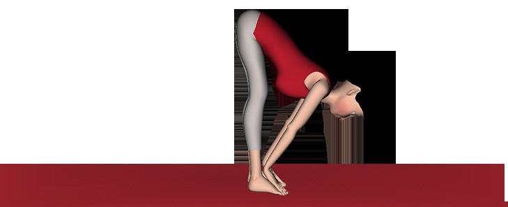 Uttanasana Yoga Standing forward bend posses Steps benefits