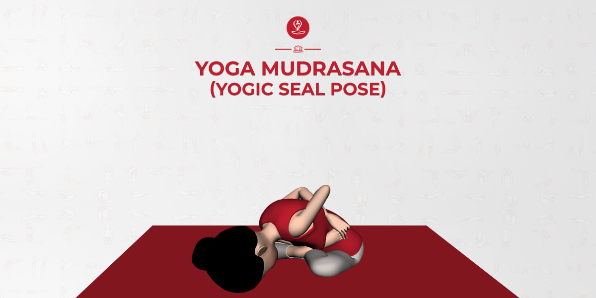 Yoga Mudrasana How To Do Yogic Seal Pose Yoga Mudrasana Benefits