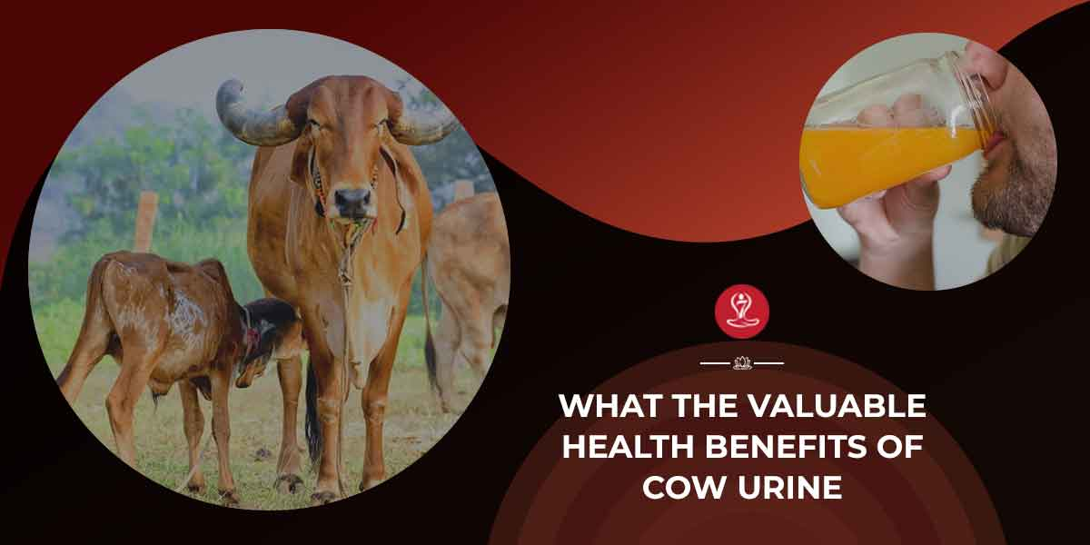 benefits of Cow Urine