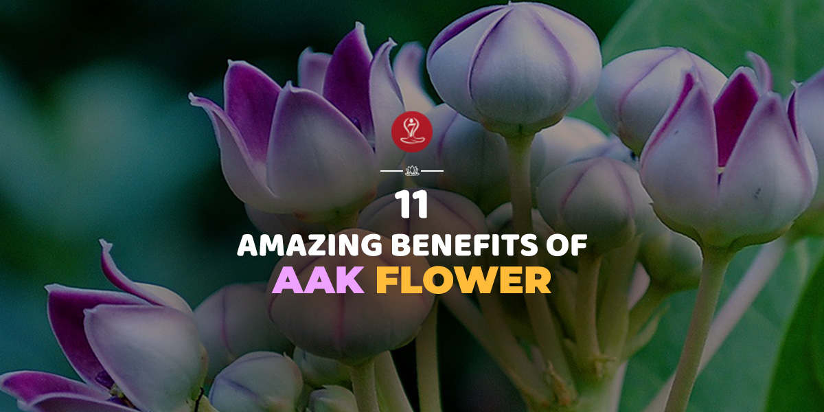 benefits of Aak
